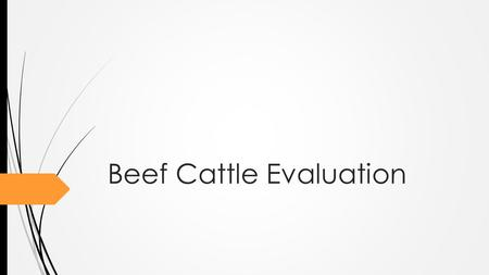 Beef Cattle Evaluation. Back to Basics  Why?  Livestock Improvement  Find functional and useful cattle  3 Areas  Breeding Heifers  Breeding Bulls.