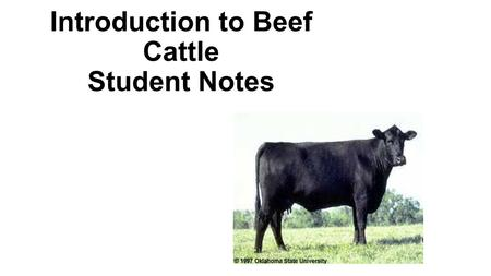 Introduction to Beef Cattle Student Notes Objectives Describe terms commonly used with __________ __________. ___________ __________ _________of the.