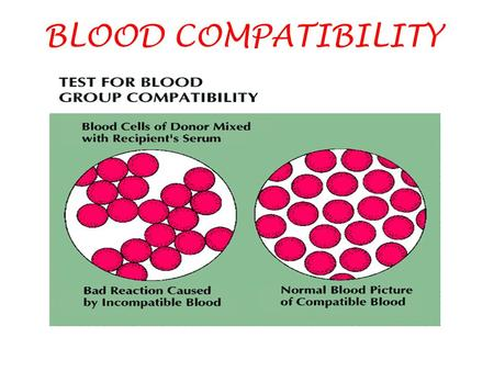BLOOD COMPATIBILITY. TESTING FOR COMPATIBILITY 1.DETERMINING BLOOD TYPES OF DONOR AND RECIPIENT. 2.CROSS-MATCHING: MIXING DONOR'S RBC'S WITH RECIPIENT'S.