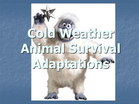 Cold Weather Animal Survival Adaptations. Rules of the North Bergman's Rule Bergman's Rule Northern subspecies tend to be larger Northern subspecies tend.