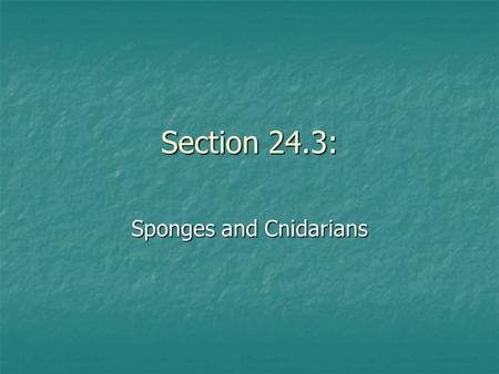 Section 24.3: Sponges and Cnidarians. A. Sponges.