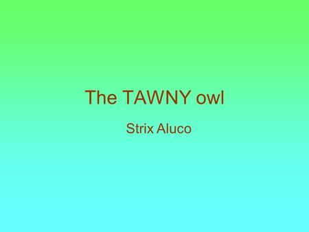 The TAWNY owl Strix Aluco. Size The Tawny owl's size is 38cm /15 inches long.