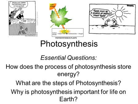Photosynthesis Essential Questions: How does the process of photosynthesis store energy? What are the steps of Photosynthesis? Why is photosynthesis important.
