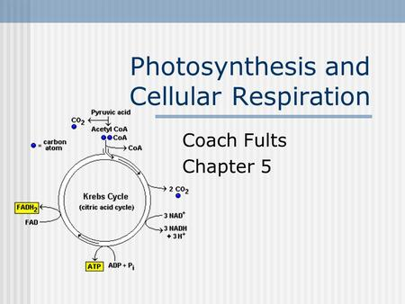 Photosynthesis and Cellular Respiration Coach Fults Chapter 5.