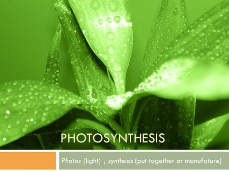 PHOTOSYNTHESIS Photos (light) + synthesis (put together or manufature)