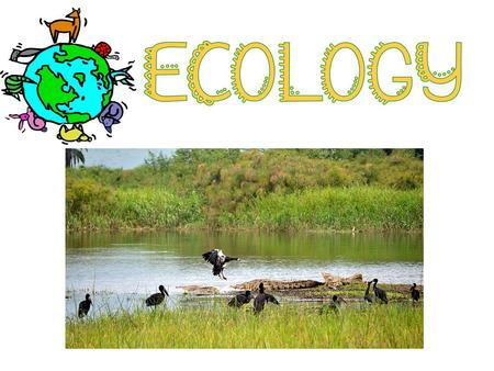 EQ: How does population size affect an ecosystem?