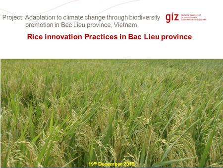 Page 1 Rice innovation Practices in Bac Lieu province 19 th December 2013 Project: Adaptation to climate change through biodiversity promotion in Bac Lieu.