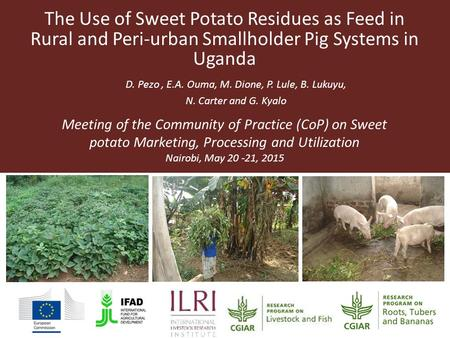The Use of Sweet Potato Residues as Feed in Rural and Peri-urban Smallholder Pig Systems in Uganda D. Pezo, E.A. Ouma, M. Dione, P. Lule, B. Lukuyu, N.