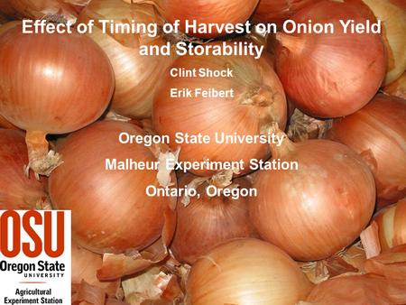 Effect of Timing of Harvest on Onion Yield and Storability Clint Shock Erik Feibert Oregon State University Malheur Experiment Station Ontario, Oregon.