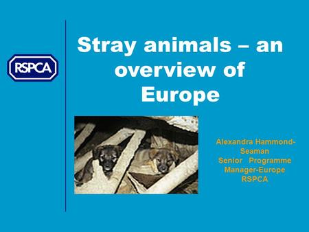 Stray animals – an overview of Europe Alexandra Hammond- Seaman Senior Programme Manager-Europe RSPCA.