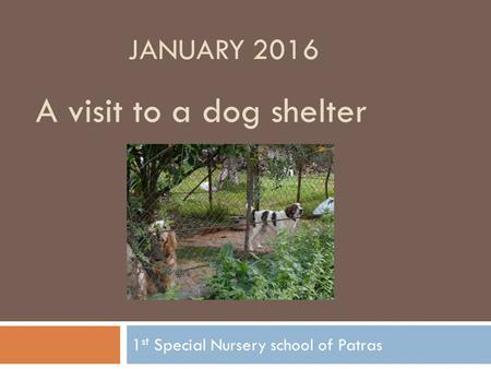 1 st Special Nursery school of Patras A visit to a dog shelter JANUARY 2016.