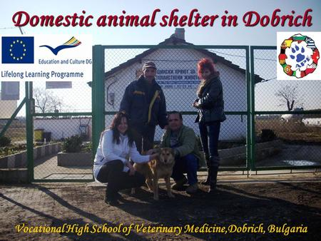 Domestic animal shelter in Dobrich Vocational High School of Veterinary Medicine,Dobrich, Bulgaria.