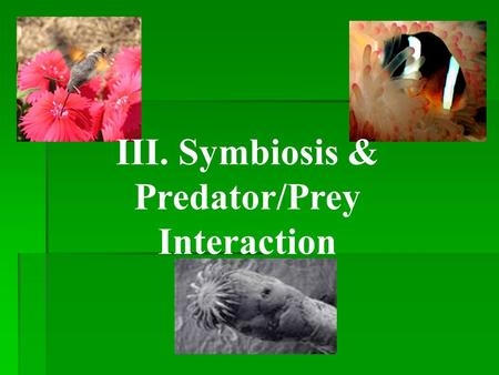 III. Symbiosis & Predator/Prey Interaction A. Symbiosis:A relationship where one species of organisms lives near, in, or on another organism. 1. Mutualism: