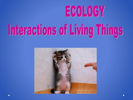 Everything is Connected Ecology The study of the interactions between organisms and their environment.