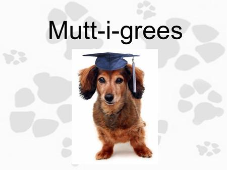 Mutt-i-grees 1.4 The Best of Both Worlds Objective: Today you will identify personal traits/characteristics that you like about yourself and others to.