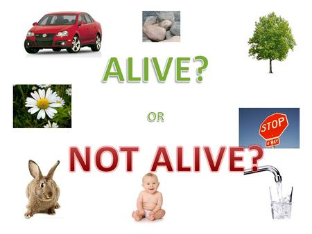 What makes something ALIVE? Reproduces=makes a copy of itself. Grows Need Water Use gases— many animals breath.