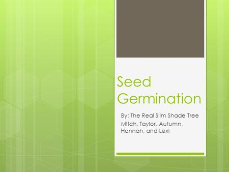 Seed Germination By: The Real Slim Shade Tree Mitch, Taylor, Autumn, Hannah, and Lexi.