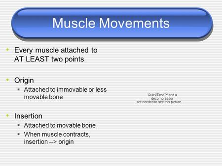 Muscle Movements Every muscle attached to AT LEAST two points Origin  Attached to immovable or less movable bone Insertion  Attached to movable bone.