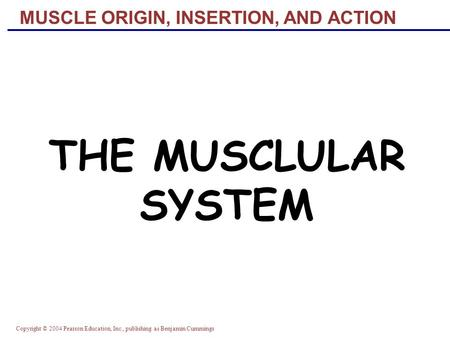 Copyright © 2004 Pearson Education, Inc., publishing as Benjamin Cummings MUSCLE ORIGIN, INSERTION, AND ACTION THE MUSCLULAR SYSTEM.