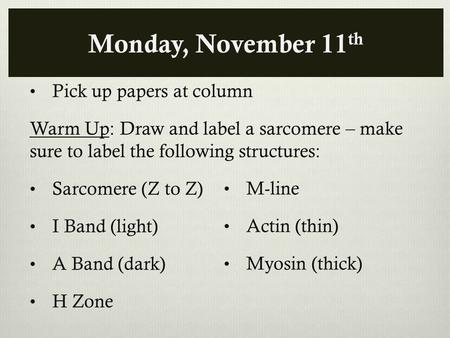 Monday, November 11 th Pick up papers at column Warm Up: Draw and label a sarcomere – make sure to label the following structures: Sarcomere (Z to Z) I.