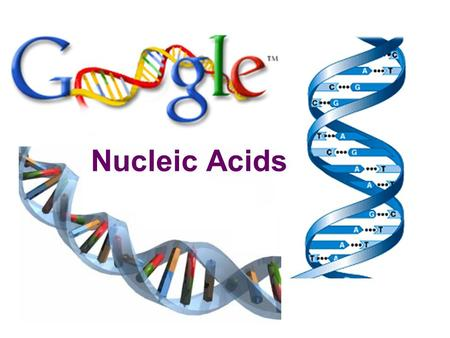 Nucleic Acids  Function:  store & transmit hereditary information  Examples:  RNA (ribonucleic acid)  DNA (deoxyribonucleic acid)  Structure: 