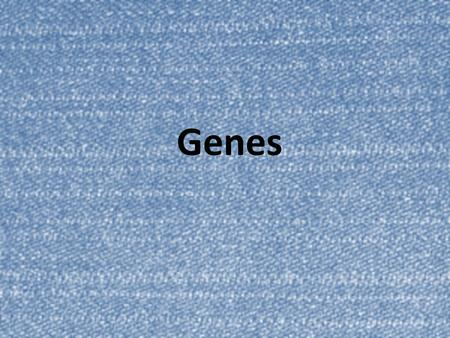Genes. Key Vocabulary – Define these terms using your notes page 17. 1.External fertilization6. Genotype 2.Internal fertilization 7. Phenotype 3.Gene.