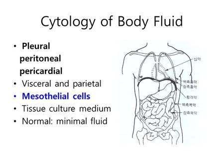 Cytology of Body Fluid Pleural peritoneal pericardial