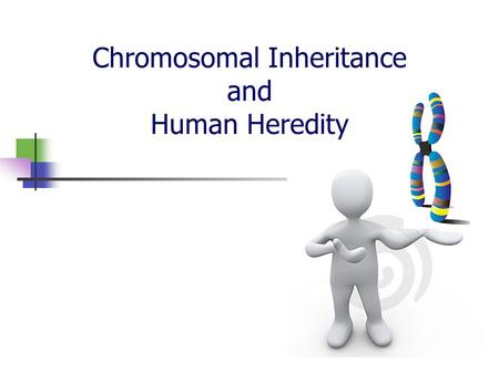 Chromosomal Inheritance and Human Heredity. Human Chromosomes Karyotype – a picture of an organism's chromosomes We take pictures during mitosis when.