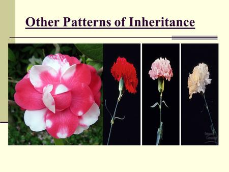 Other Patterns of Inheritance. Exceptions to Mendel's Rules There are exceptions to every rule, and exceptions to the exceptions. Question: What happens.