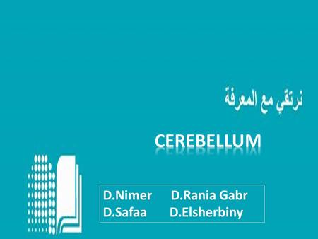 D.Nimer D.Rania Gabr D.Safaa D.Elsherbiny. Objectives Identify the major lobes and regions of cerebellum. Summarize the structure of the cerebellar cortex.