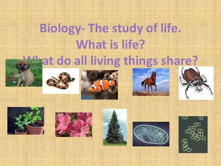Biology- The study of life. What is life? What do all living things share?