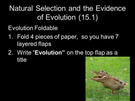 "Natural Selection and the Evidence of Evolution (15.1) Evolution Foldable 1.Fold 4 pieces of paper, so you have 7 layered flaps 2.Write ""Evolution"" on."