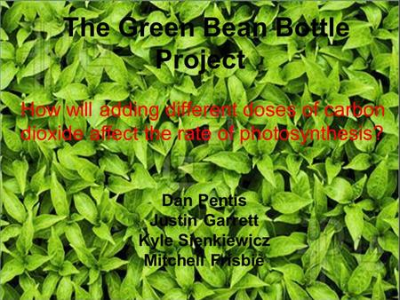 The Green Bean Bottle Project Dan Pentis Justin Garrett Kyle Sienkiewicz Mitchell Frisbie How will adding different doses of carbon dioxide affect the.