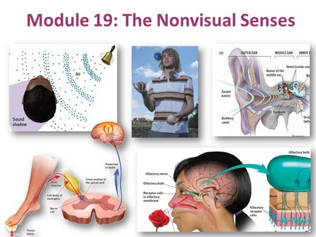 Module 19: The Nonvisual Senses. Hearing/Audition: Starting with Sound.