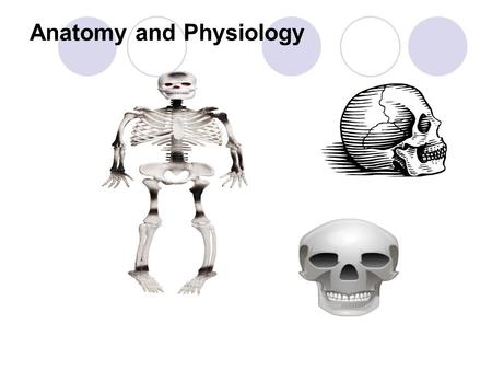 Anatomy and Physiology. Lesson Objectives After this lesson students will be able to: Explain the relationship and function of : Cells Tissues Primary.