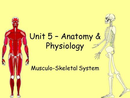 Unit 5 – Anatomy & Physiology Musculo-Skeletal System.