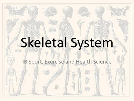Skeletal System IB Sport, Exercise and Health Science.