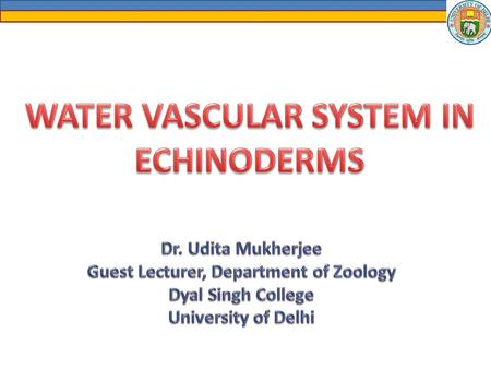 Basic Features of the Water Vascular System Unique feature of the echinoderms. Unique feature of the echinoderms. Consists of canals and appendages of.