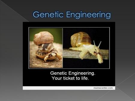  What is Genetic Engineering?  Types of GE  Aims  Ethical issues  Organizations against modified food  Arguments for and against  Sources.