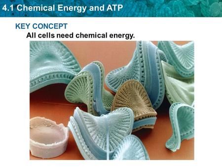 4.1 Chemical Energy and ATP KEY CONCEPT All cells need chemical energy.