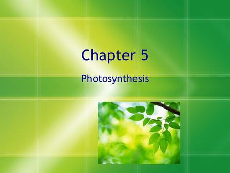 Chapter 5 Photosynthesis Photosynthesis. Thinking Question #1  Why are we talking about photosynthesis?  Why is it important that you understand this.
