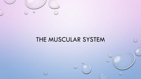 THE MUSCULAR SYSTEM. FUNCTIONS OF MUSCLE PRODUCING MOVEMENT – BOTH INTERNAL AND WHOLE – BODY MAINTAINING POSTURE STABILIZING JOINTS GENERATING HEAT.