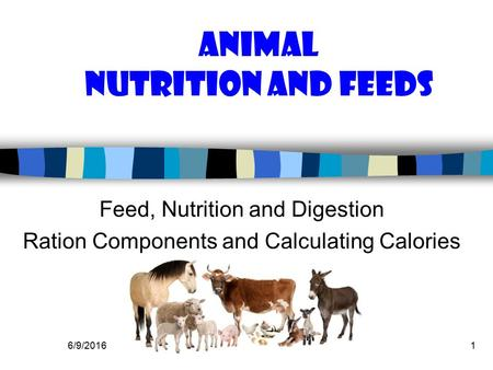 6/9/20161 Animal Nutrition and Feeds Feed, Nutrition and Digestion Ration Components and Calculating Calories.