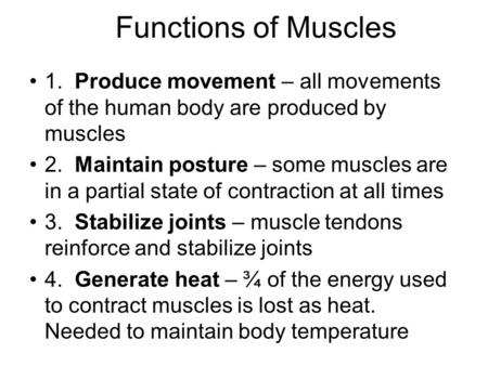 Functions of Muscles 1. Produce movement – all movements of the human body are produced by muscles 2. Maintain posture – some muscles are in a partial.