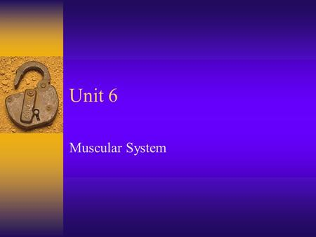 Unit 6 Muscular System. Structure of a skeletal muscle  Skeletal muscle is an organ of the muscular system. Composed of : –Skeletal muscle tissue –Nervous.