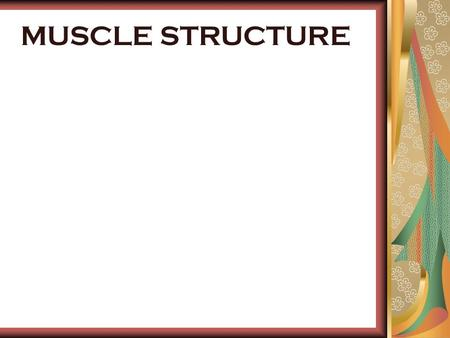 MUSCLE STRUCTURE. WHAT IS SKELETAL MUSCLE? Muscles are composed of strands of proteins grouped together in fibres. 70% of tissue is water Creates movement.