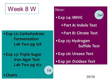Week 8 W New: Exp 24: IMViC Part A: Indole Test Part B: Citrate Test