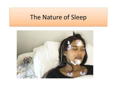 The Nature of Sleep. Links to the Specification Develop a critical understanding of the nature of sleep – what happens during sleep and its possible function.