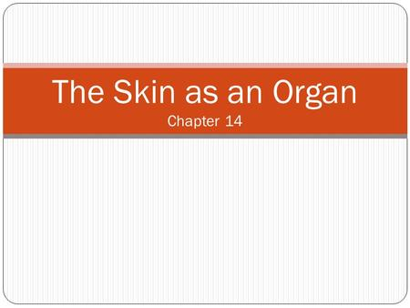 The Skin as an Organ Chapter 14. The Bodies Tough Covering The skin performs several major functions in the body.
