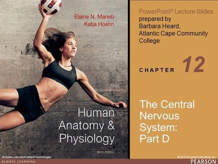 Human Anatomy & Physiology Ninth Edition PowerPoint ® Lecture Slides prepared by Barbara Heard, Atlantic Cape Community College C H A P T E R © 2013 Pearson.